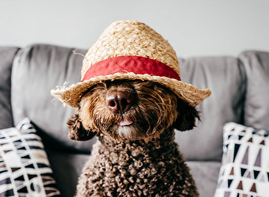 Dog in hat